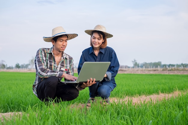 Asian farmer man and woman couple wear hat using laptop computer at green rice field