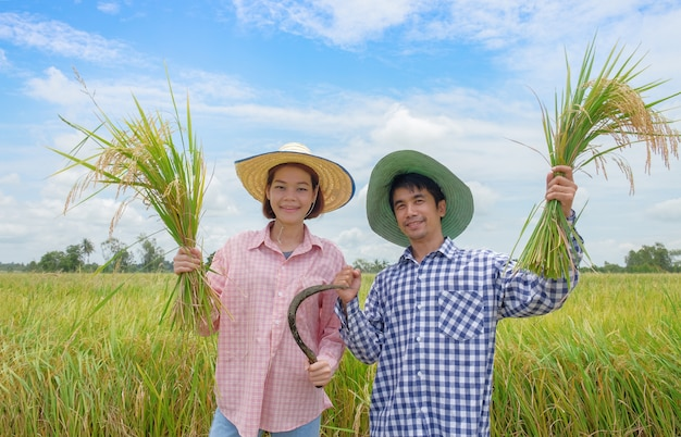 Asian farmer, man and woman wearing a hat pink and blue striped shirt holding the golden paddy grains and smiling happily in the beautiful rice fields