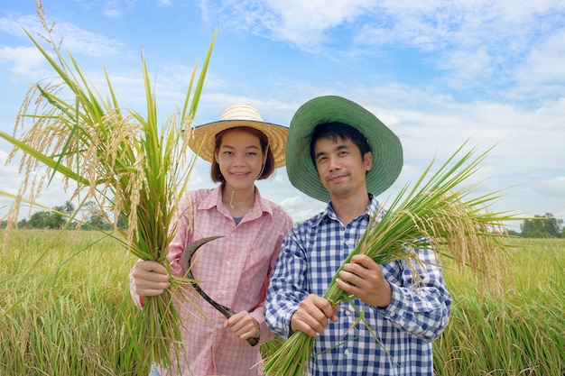 Asian farmer man and woman wearing a hat pink and blue striped shirt holding the golden paddy grains and smiling happily in the beautiful rice fields