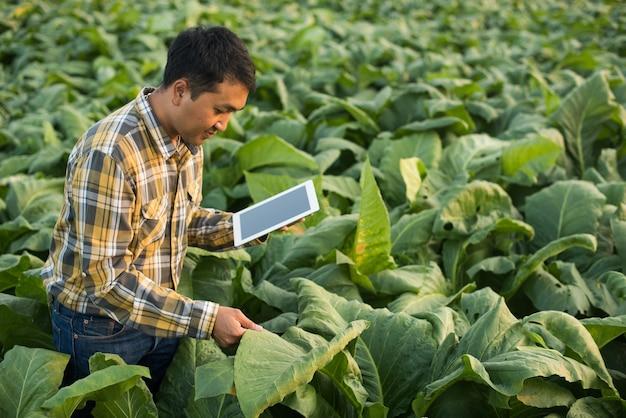 담배 농장에서 식물을 연구하는 아시아 농부. 농업과 과학자 개념.