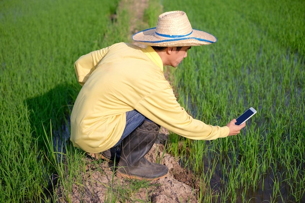 An asian farmer sits and takes pictures of rice plants with a smartphone in a green field.