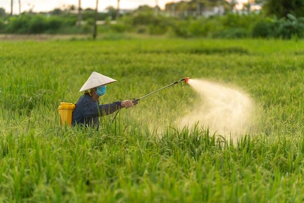 Азиатский фермер распыляет пестициды на рисовых полях