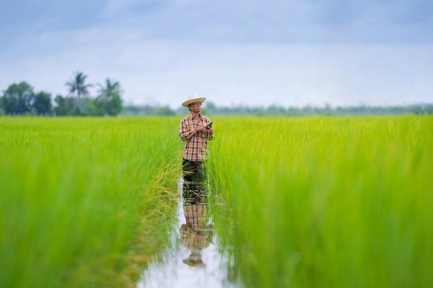 Asian farmer using digital tablet in a green rice field