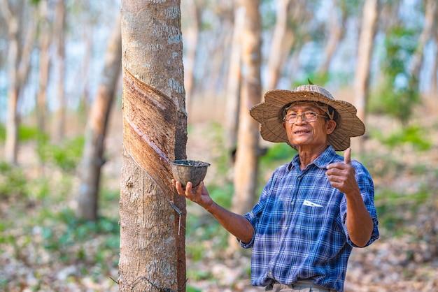 Азиатский фермер с чашками латексного каучукового дерева на каучуковой плантации