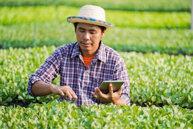 Asian farmer with a hat using a digital tablet and checking young seedlings
