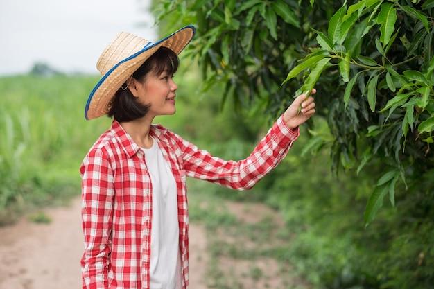 Asian farmer woman wear red shirt smile and nourishing maintain mango trees at corn farm
