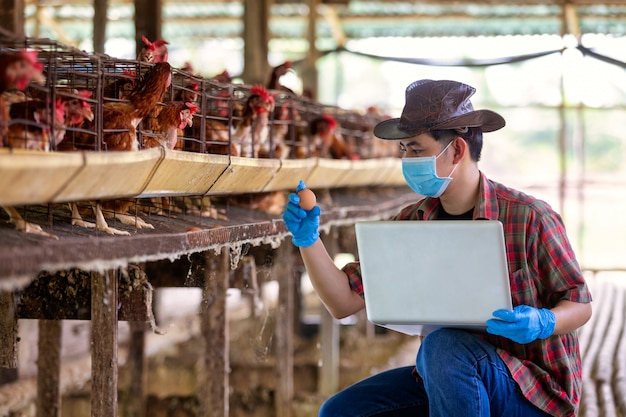 Asian farmers inspect and record the quality data of the chicken eggs using a laptop in eggs chicken farm.