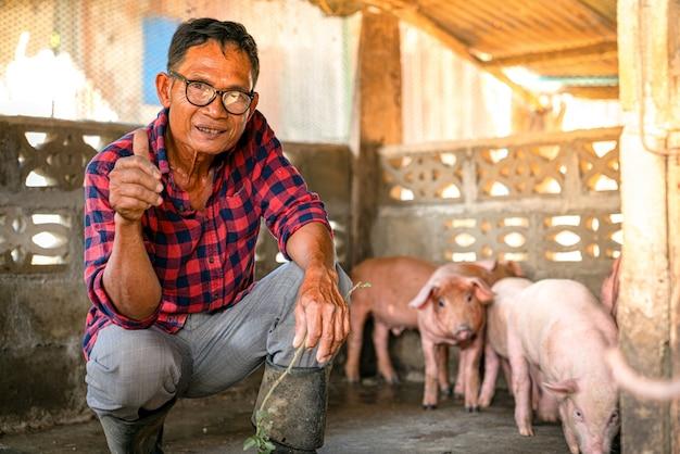 아시아 농부들은 농장에서 돼지를 기른다.