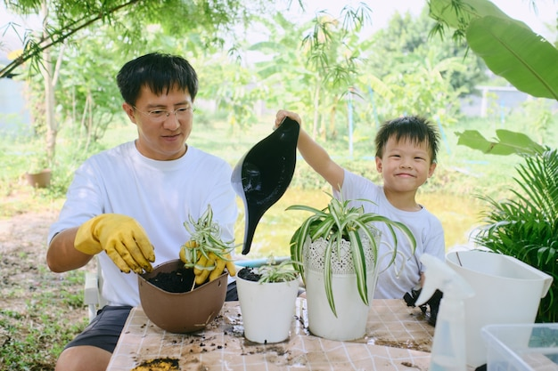 Asian father teaching boy child planting spider plan at backyard dad and son gardening together