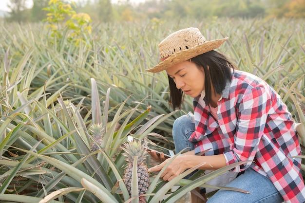 아시아 여성 농부는 농장에서 파인애플의 성장을보고 있습니다. 농업 산업, 농업 사업 개념.