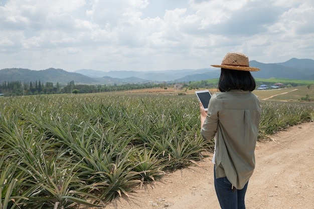 Asian female farmer see growth of pineapple in farm. agricultural industry, agriculture business concept. innovation technology for smart farm system, farmer occupation. farmer holding tablet in field