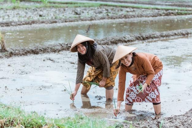 아시아 여성 농부가 쌀밭에 벼를 심기 위해 몸을 구부리면서 미소 짓는다.