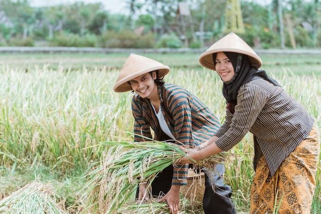 アジアの男性と女性の農家は、畑で一緒に収穫した後に収穫された稲を互いに助け合っています