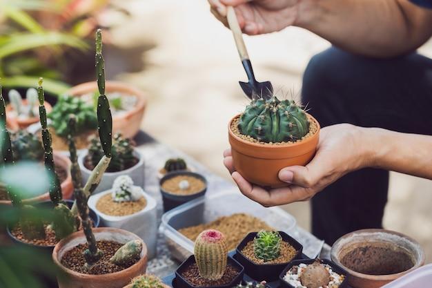 自宅の裏庭の庭で新しい鍋に緑の木を植えるアジア人男性サボテンコレクター。自宅で仕事の新しい通常のライフスタイルコンセプト。