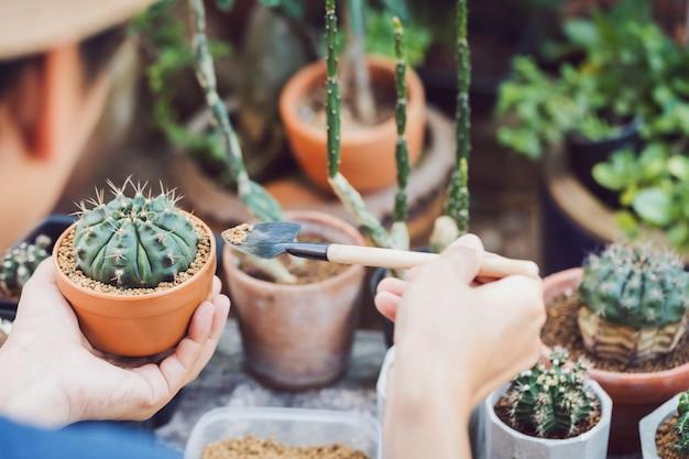 自宅の裏庭の庭で新しい鍋に緑の木を植えるアジア人男性サボテンコレクター。