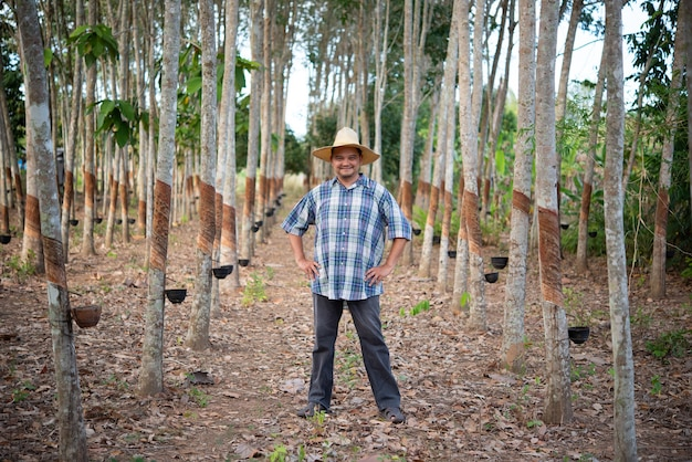 Asian man farmer agriculturist happy at a rubber tree plantation with rubber tree in row natural latex is a agriculture harvesting natural rubber in white milk color for industry in thailand