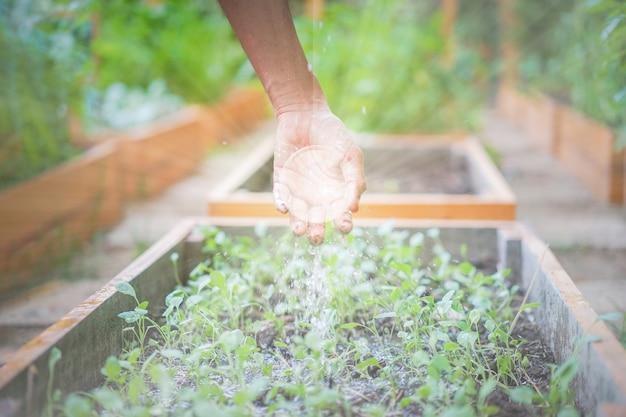 Рука азиатского мужчины поливает саженец, держа немного земли и воды, чтобы распределить по площади плантации с эффектом кристаллического шара и осветить все это.