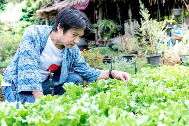アジアの中年農家彼が育てた新鮮な野菜の品質を、人と自然のコンセプトに合わせてチェックしています。
