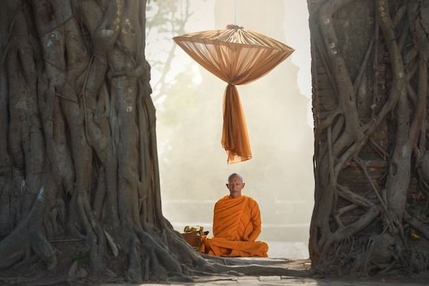 나무, 태국 아래 명상 아시아 스님