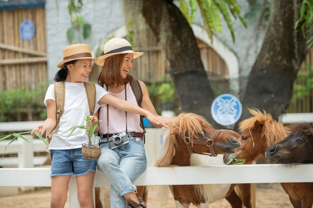Asian mother and daughter feeding pony horse at animal farm.