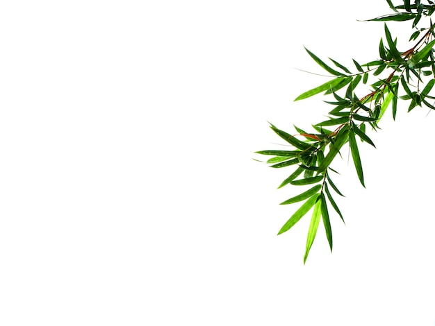 Asian natural background with bamboo