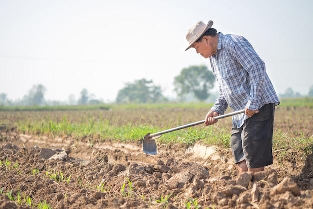 トウモロコシ畑で鍬で土を雪かきするアジアの老人