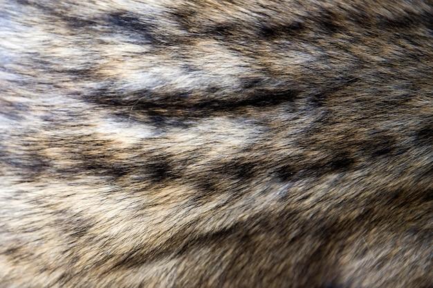 Asian palm civet fur