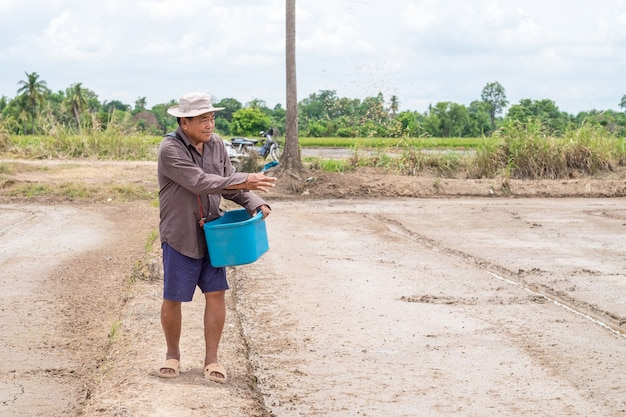 아시아 수석 농부 쌀 농장에서 쌀 씨앗을 뿌리다