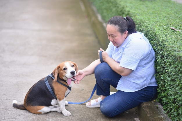 Asian senior woman playing tease with her beagle dog in the park