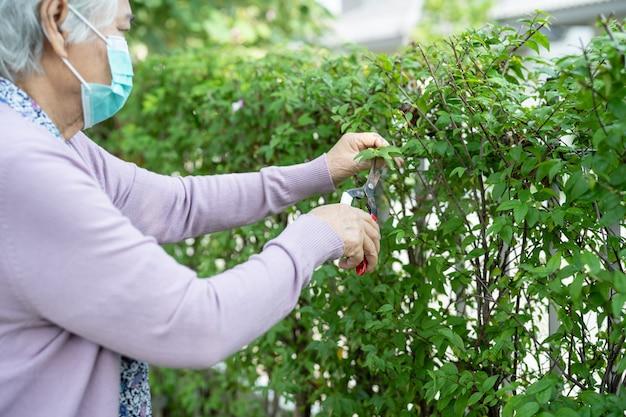 アジアの年配の女性は庭の世話をするために剪定ばさみで枝を整えます