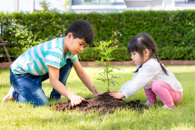 Asian sibling brother and sister planting young tree on black soil together as save world in garden at house on summer day. planting tree.
