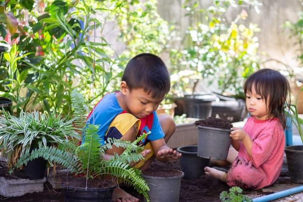 アジアの兄弟が鉢に木を植える子供たちは晴れた日の夏に庭の鉢に春の花の木を植えています