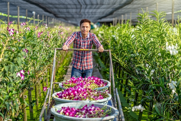 Asian small business owner of orchid gardening farm