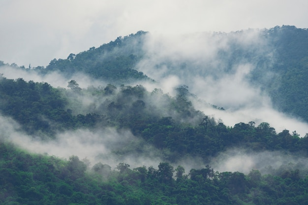 Asian tropical rainforest, nature view background