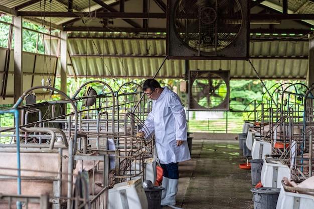 돼지 농장, 동물 및 돼지 농장에서 일하는 아시아 수의사 및 돼지 사료 먹이기