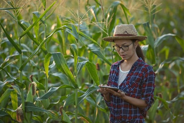 Contadina asiatica con tavoletta digitale nel campo di mais, bellissima alba mattutina sul campo di mais. campo di mais verde nel giardino agricolo e la luce splende al tramonto la sera sfondo di montagna