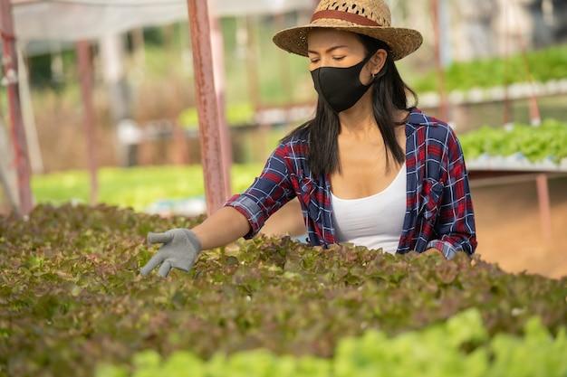 아시아 여성 농부는 행복과 야채 수경 농장에서 가장 무도회를 착용합니다. 그린 하우스 농장에서 미소로 그린 샐러드 야채의 품질을 확인하는 여자 농부의 초상화.