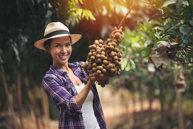 帽子をかぶった紫色のシャツを着たアジアの女性の庭師は、晴れた日にフルーツガーデンでリュウガンを表示します