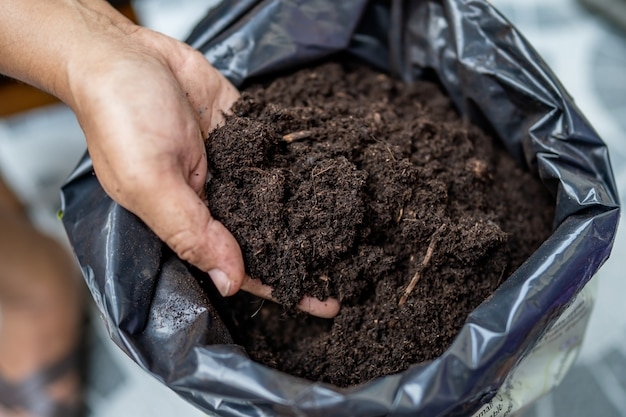 Asian woman holding peat moss organic matter improve soil for horticultural plant growing