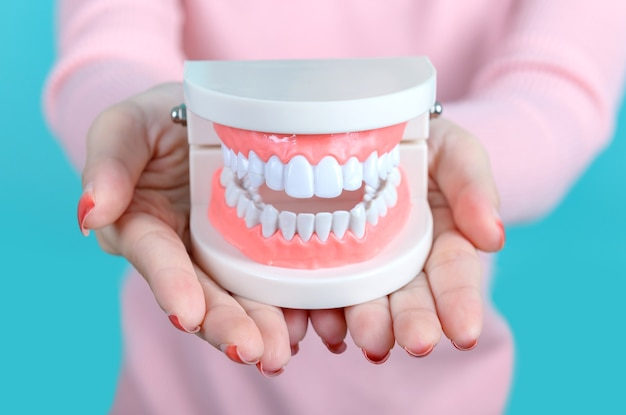 Asian woman holding tooth model on blue screen background. dental care and healthy teeth.