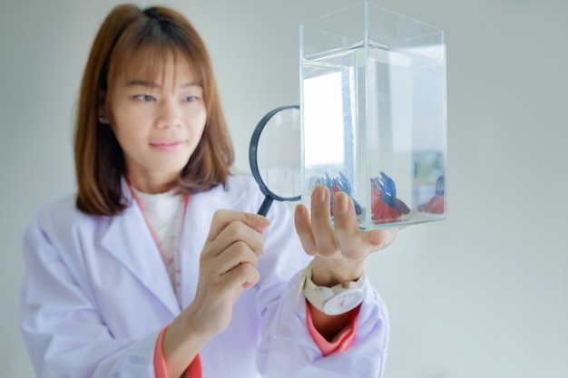 Asian woman scientist in doctor hold magnifying glass looking fighting fish glass tank on