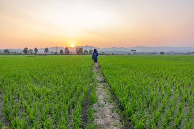 Asian woman tourist looking at green rice field over sunset shining through the mountains.