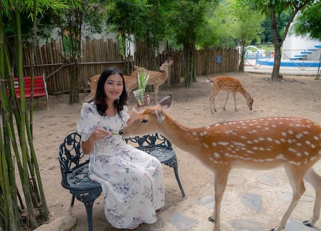アジアの女性観光客が座って、庭、フレンドリーな動物の緑の草の葉でニホンジカを養う