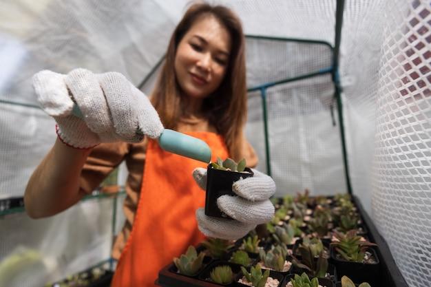 Азиатская женщина в фартуке занимается расслабляющим хобби в домашнем саду, работает в мини-теплице и добавляет каменные хлопья в небольшой стручок кактуса. концепция расслабляющей работы и деловой работы дома.