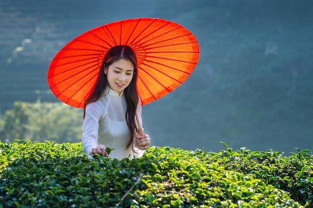 緑茶畑で伝統的なベトナム文化を身に着けているアジアの女性。