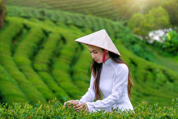 Asian woman wearing vietnam culture traditional in tea plantation