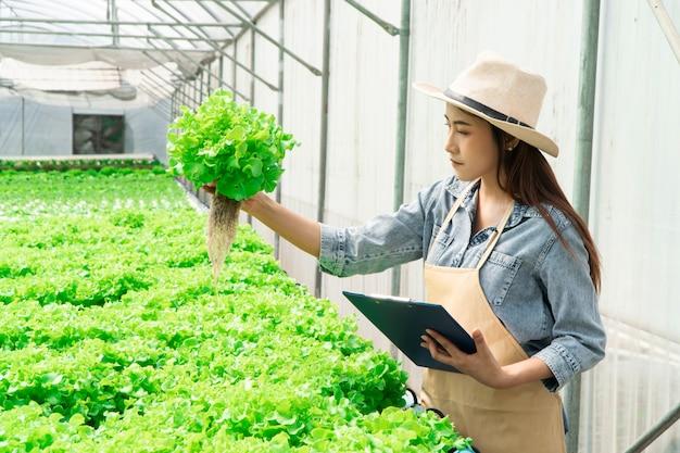 수경 야채 농장에서 녹색 참나무를 들고 greenbo의 뿌리와 품질을 확인하는 아시아 여성