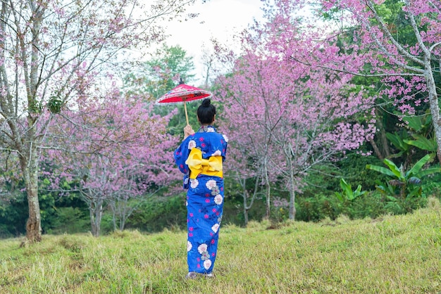Asian women wearing kimono traditional in himalayan cheery blossom park, with red umbrella. women na