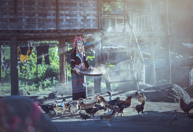 Asian women worker winnowing rice separate between rice and rice husk and feeding chickens