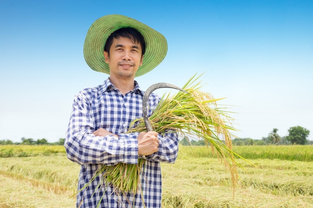 Asian young farmer happy harvest paddy rice in a green rice field and blue sky
